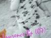 Laurence-B.P.-07